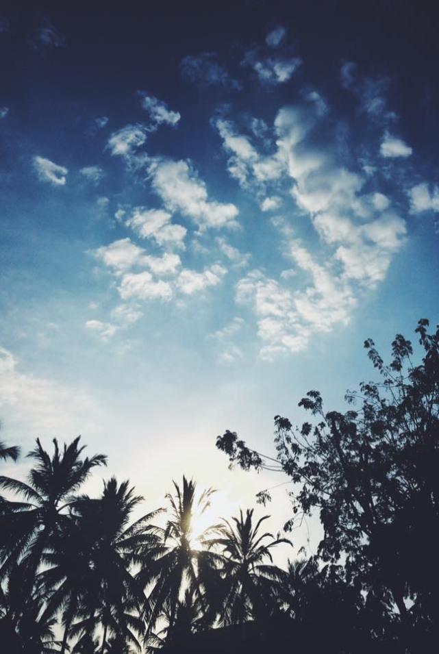 Palmtrees Lombok